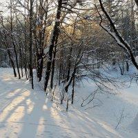 Холодное утро... :: Юрий Цыплятников