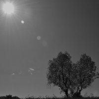 дерево-сердце :: виктория иванова