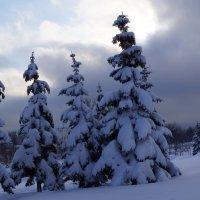 Была зима :: Andy Bayt