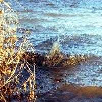 Волна :: Сурикат Сусликов