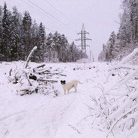 Зимняя прогулка. :: Алла Мещерякова