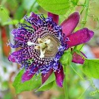 Цветок :: Павел Белоус