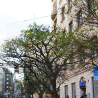 Прага, 10 января 2014 :: Valeria Ashhab