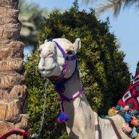 Camel :: Artemy Gunn