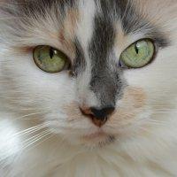 Кошка :: Светлана Мартынова