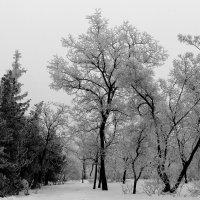 Волгоградская зима :: Dr. Olver