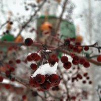 Зима. Утро. :: Екатерина Федорова