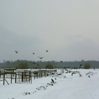 Зима. :: Виталий Меркл