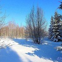 Зимняя картинка :: Yasnji