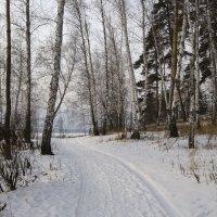 Зимний пейзаж. :: Сергей Адигамов