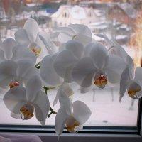 Восхищаюсь природы искусством, что создАла для нас орхидею!.. :: Надежда