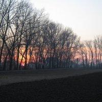 Весенний закат :: iv lara