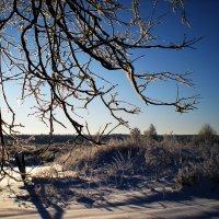 контрастная зима :: Наталья Ерёменко