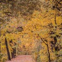 Осенняя дорога :: Irina Titova