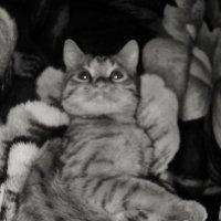 Кошачий малышок Васюнька. :: Ольга Кривых