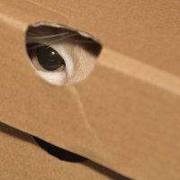 Подглядывающий кот в коробке.... :: Павел Савин