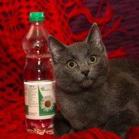 кошки тоже улыбаются :: Арсений Корицкий