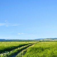 Дорога к реке :: юрий Амосов