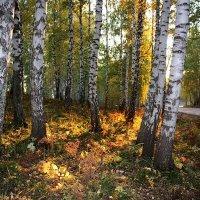 Заглянуло солнце в лес. :: Наталья Юрова