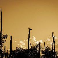 Гордый орел :: Павел Белоус
