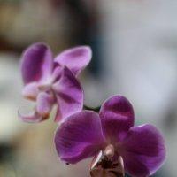 Цветы :: Виктория