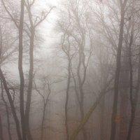 Туманный лес :: Михаил Баевский