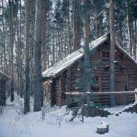 Новый год в бору. :: Kassen Kussulbaev