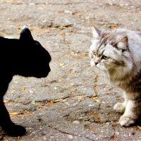 Городские коты :: Екатерина Углова