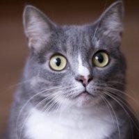 кошка :: Vitalij P