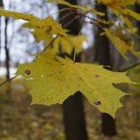 Осень :: Мария Афанасьева