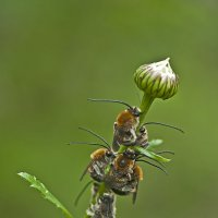 Спят усталые пчелушки :: Александр Земляной
