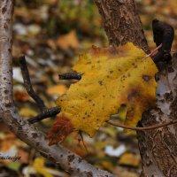Осенний лист :: Анастасия Никитина