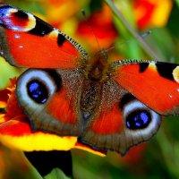 Бабочка :: Николай Сапегин