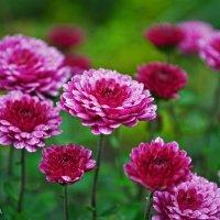 Долина цветов :: Алина Белич
