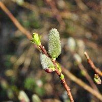 весна :: наталья Евсеева