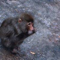 Monkey :: Александр Мозымов
