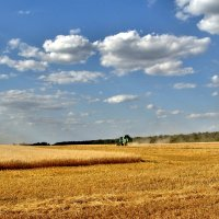 Битва за урожай :: Владимир Горбунов