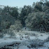 Зима :: Михаил Рогожин