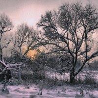 Январский вечер. :: Алла Мещерякова