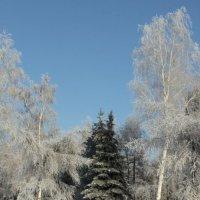 морозно :: Оксана Безель