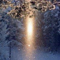 Солнечный снегопад... :: Маргарита Дворянникова