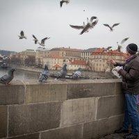 Карлов мост :: nataliya korchma