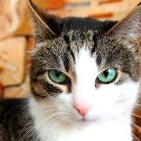 Кошка :: Елена Севастьянова