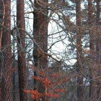 ноябрьский жар :: liudmila drake