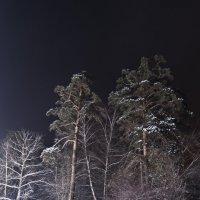 Лунная поляна :: Николай