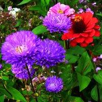 Цветы :: Владимир Фещенко