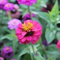 цветы :: Таша Строгая