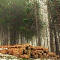 Смерть деревьев :: Дмитрий Стамиков