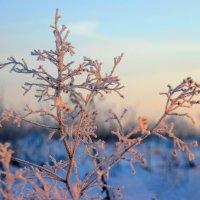 Ветвь кустарника. :: Victor Klyuchev