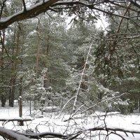 В зимнем лесу... :: Лена L.